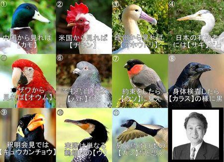 ポッポ鳩山の鳥図鑑